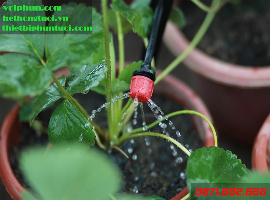 Nhược điểm của hệ thống tưới nhỏ giọt và biện pháp khắc phục