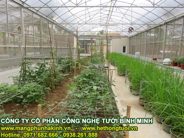 lưới giàn leo, cách làm giàn mướp trên sân thượng, hướng dẫn cách làm giàn trồng cây leo