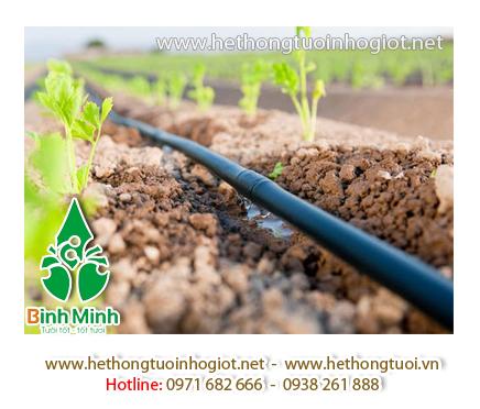 Cung cấp hệ thống tưới nhỏ giọt cho vườn hoa ly tại Thanh Hóa