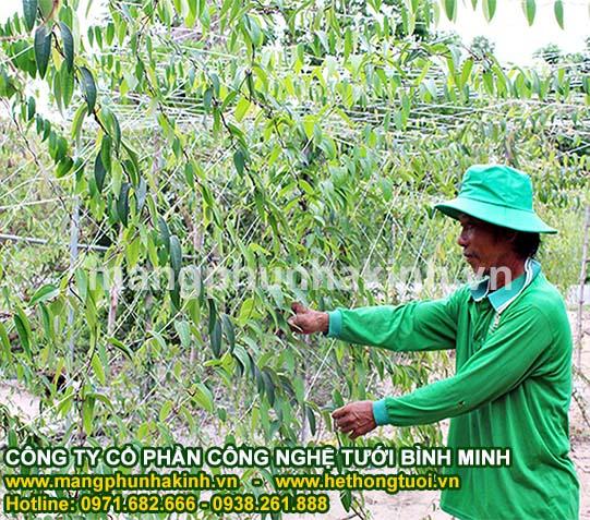 Lưới giàn leo dành cho nhà vườn - Hướng dẫn cách sử dụng tốt nhất
